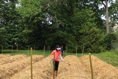 Préparation du terrain avec de la paille