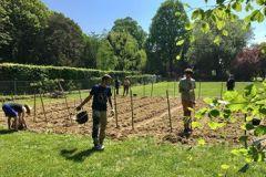 Préparation des lignes de plantation