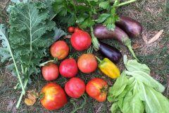 Récolte de légumes méditerranéens