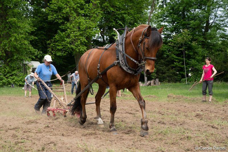 Labours à cheval